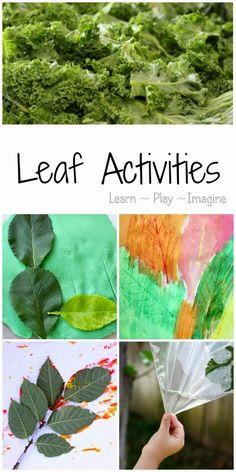 14 hands on activities to learn about leaves including art, math, literacy, and science.