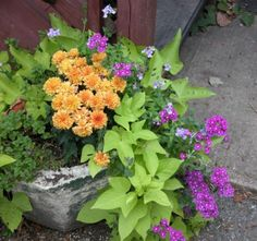 container gardening ideas | Photo: © Marie Iannotti (2008) licensed to About.com, Inc.