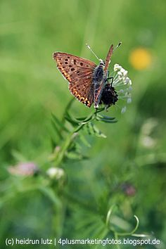 Schmetterling, Natur, Umwelt, nachhaltigkeit, artenvielfalt