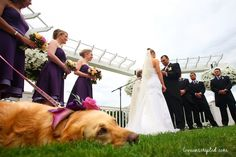 wedding and dog - Click image to find more Photography Pinterest pins