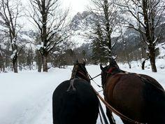 Winter Wonderland - horse sleigh ride in Hinterthal Austria