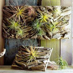 不思議な植物エアプランツの楽しみ方と、最高にかっこいい飾り方