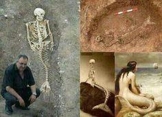 They found a mermaid skeleton. the little Mermaid is real? Real Mermaids, Mermaids And Mermen, Mermaids Exist, Cultures Du Monde, Mermaid Skeleton, Arte Horror, Merfolk, Mermaid Art, Ariel Mermaid