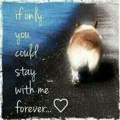 I think this about my Sammi girl every day since I lost her. Corgi Dog, Dog Cat, Pet Loss Grief, Amor Animal, Corgi Pictures, Out Of My Mind, Dog Items, Pembroke Welsh Corgi, Rainbow Bridge