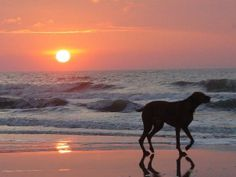 Hilton Head Island is the best vacation spot for families - including your pet! Photo by Stephen L.