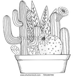 Hand drawn set of succulents or cacti in pots. Doodles elements. Black and white. Coloring book page for adult. Summer, succulent, doodles, art design elements. Linear botanical.