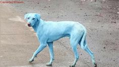 Mumbai factory shut down after industrial waste turns dogs blue