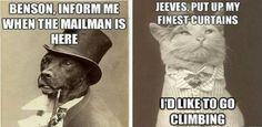 24 Ideas Funny Cute Cats Hilarious Pets For 2019 Super Funny Memes, Funny Dog Memes, Funny Animal Memes, Funny Animals, Funny Quotes, Baby Memes, Adorable Animals, Funny Texts, Funny Cute Cats