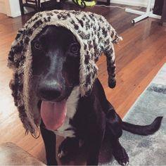 stylin it up with some #leopardprint  #stickyourtongueout #trendsetter #handsomedog #blackisthenewblack #wheredidmytoygo #dogsofinstagram