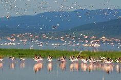 Lake Nakuru in Kenya/Озеро Накуру в Кении