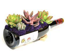 Glass Succulent Planter / Wine Bottle Planter / Garden / Wine
