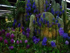 rare vanda orchids | Rare Orchids - Land of the Vanda