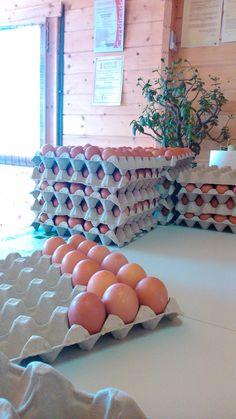 Huevos de primera calidad en calibres M y L.