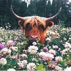 This cow is so unimpressed by these flowers and I love it so much.  I'm having such an amazing week. Speaking to students about a plant based diet and singing and dancing my heart out. All of my favourite things  What has been the best part of your week?  Shared from @plantbasedshannon 's feed   #vegansofig #veganlife #plantbased #meatfree #vegan #eatclean #peace #vegansofinstagram #kindness #compassion #plantpowered #animalrights #healthy #rawtill4 #highcarbvegan #earthlings #veganpower…