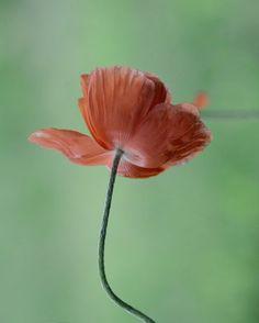 Fine Art Photography Botanical Peachy by KarenWebbPhotography, $29.00