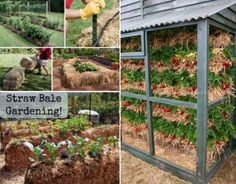 You will love to learn these Straw Bale Gardening Techniques and we have a video tutorial of Joel Karsten explaining all you need to know. Hay Bale Gardening, Strawbale Gardening, Container Gardening, Mason Jar Herb Garden, Homestead Gardens, Moss Garden, Herbs Garden, Soil Improvement, Gardening Magazines