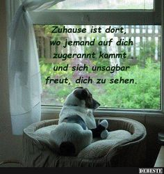 German Quotes, Social Trends, Facebook Humor, Cool Pets, Animal Quotes, True Words, Dog Love, Animals And Pets, Best Dogs
