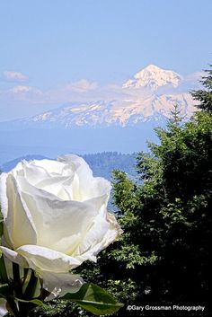 View to Mt. Hood from the International Rose Test Garden in Portland, Oregon - VMA.