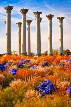 The Old Guards - Washington, DC - National Arboretum