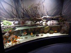 Goldfish hardscape