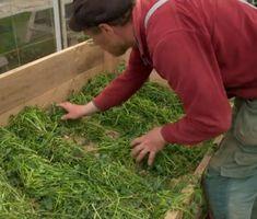 Gör som Mandelmanns – odla i sand och gräsklipp!   Land Greenhouse Gardening, Gardening Tips, Growing Vegetables, Dream Garden, Amazing Gardens, Vegetable Garden, Outdoor Gardens, Herbs, Flowers