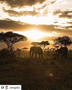 This Luxury Safari Brand is Leading The Way in Eco-Tourism Wildlife Photography, Travel Photography, Nature Architecture, Serengeti National Park, Safari Adventure, Out Of Africa, African Safari, Animals Beautiful, Traveling By Yourself