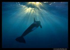 Toward The Light — Orca Style #Norway  credit: audunrikardsen.com