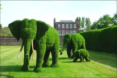 Elephants - Possible kindergarten project scaled way down as a topiary. Kids of all ages would love this!