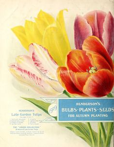 The Biodiversity Heritage Library works collaboratively to make biodiversity literature openly available to the world as part of a global biodiversity community. Planting Bulbs, Planting Seeds, Plant Crafts, Beautiful Collage, Old Book Pages, Art Clipart, Painted Paper, Old Art, Picture Collection