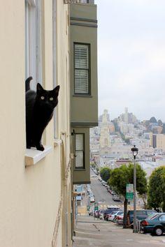 Black cat in San Francisco, Ca