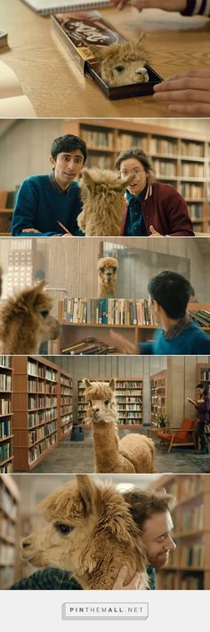 This Biscuit Ad Featuring Adorable Alpacas Will Brighten Your Day - DesignTAXI.com... - a grouped images picture - Pin Them All