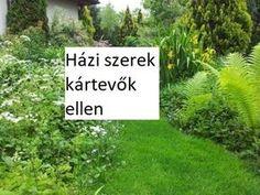 Ikebana, Pest Control, Herb Garden, Organic Gardening, Herbs, Backyard, Flowers, Nature, Plants