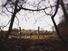 Vienna, Vineyard, Outdoor, Outdoors, Vine Yard, Vineyard Vines, Outdoor Games, The Great Outdoors