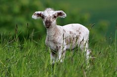 Kurz notiert: Trächtigkeitskalender | Kuriose Tierwelt