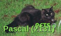 Please help us find Pascal the Cat missing in the N6 area. For more details click http://j.mp/1nlCIDH