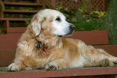Stem Cell Therapy For Osteoarthritis in Dogs