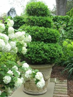 Love the topiary and soft white hydrangea- green and white are my favorite garden color schemes