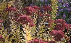 Beautiful fall colours.