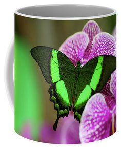 Emerald Swallowtail On Purple Orchid. Beauty In Frame 2 Coffee Mug for Sale by Jenny Rainbow Purple Orchids, Mugs For Sale, Fine Art Photography, Emerald, Coffee Mugs, Rainbow, Frame, Plants, Gifts