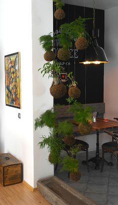 Great use of kokedama in creating a living screen to create a sense of privacy in a small space. Mini Plants, Faux Plants, Indoor Plants, Japanese Plants, String Garden, Small Balcony Garden, Plantas Bonsai, Decoration Plante, Outdoor Landscaping