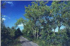 Windsor Locks Canal State Park Trail