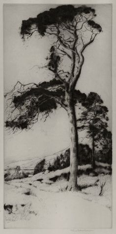 "John George Mathieson (Active 1910-1940) - Scottish Pine. Drypoint Etching. Scotland. Circa 1920. 13-3/4"" x 6-3/4""."