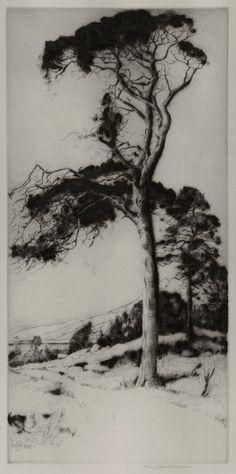 "John George Mathieson (Active 1910-1940) - Scottish Pine. Drypoint Etching. Scotland. Circa 1920. 13-3/4"" x 6-3/4""."