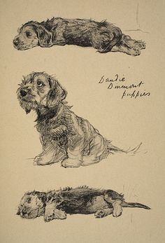 Dandie Dinmont Puppies by Cecil Charles Aldin - Reproduction Oil Painting Animal Paintings, Animal Drawings, Art Drawings, Animal Gato, Dachshund Art, Daschund, Dog Illustration, Vintage Dog, Dog Portraits