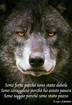 Un pò del casino che c'è in me. Che un po pazzo lo resterò per. Wolf Spirit, Spirit Animal, Make Money Online, How To Make Money, Wolf Quotes, Beautiful Wolves, Wild Creatures, Linkin Park, Entrepreneur Quotes