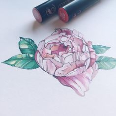 @carvel_art their amazing illustration of a pink flower.