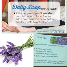 I fell in love with lavender many years ago. Besides helping with sleep, I love using it to calm down skin irritations from burning my finger on hot stove to sun burns. Why do you love lavender?. #sleep #dailydrop #skin #calming #restful #renewyouholistichealth #renewyouhealthandwellness @renewyouholistictherapy