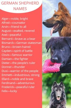 We have listed thousand of unique german shepherd names in our site for gsd lovers