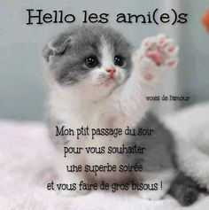 Hello les ami(e)s Cute Kitten Gif, Kittens Cutest, Cute Cats, Funny Cats, All Animals Photos, Animals And Pets, Cute Animals, Cute Creatures, Beautiful Creatures