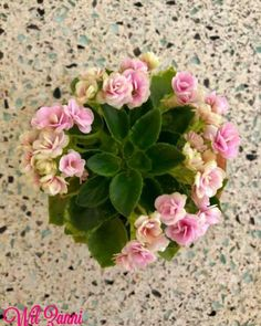 Saintpaulia, Houseplants, Wordpress Theme, Indoor Plants, Floral Wreath, Bloom, Miniatures, African, Inside Plants